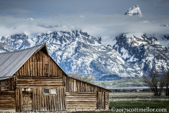 Wild Wyoming Tours