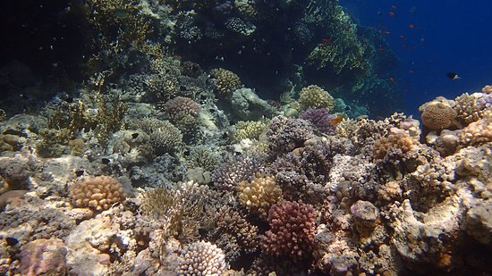 Sharks Bay Umbi Diving Village: Beautiful reefs!
