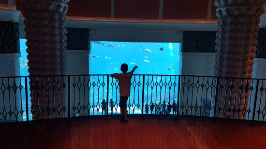 Atlantis, The Palm: 20170509_100930_large.jpg