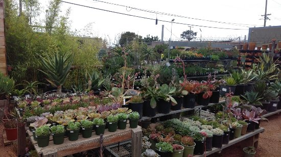 Cactus Jungle Outdoor Nursery 1 And Garden