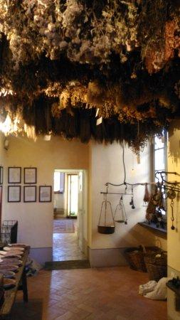Aboca Museum: IMG-20170824-WA0007_large.jpg