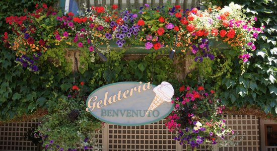 The Butchart Gardens: The Hanging Baskets were amazing!