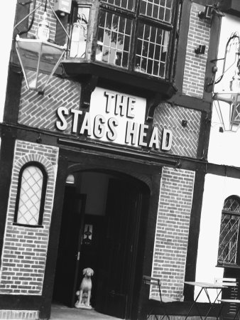 ‪The Stags Head‬