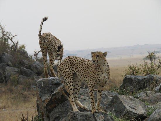 Foto de Nieleze Serengeti Camp