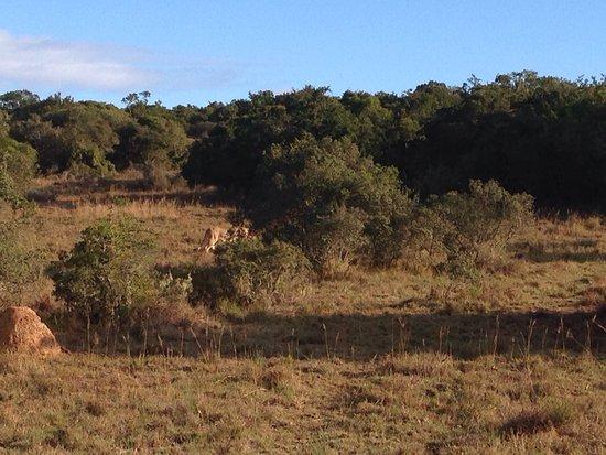 Shamwari Game Reserve Lodges: photo1.jpg