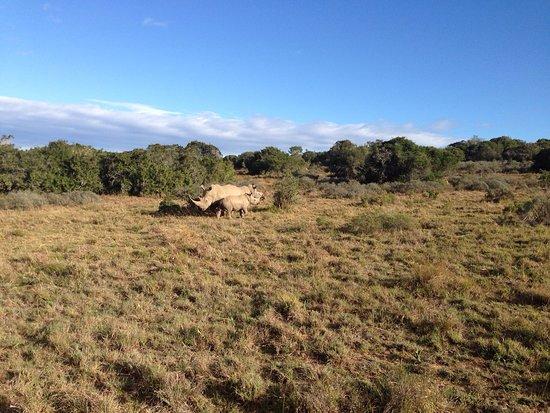 Shamwari Game Reserve Lodges: photo3.jpg