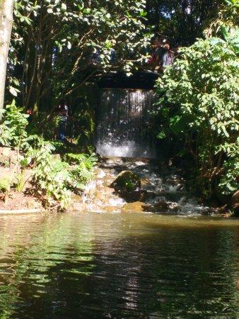 Jardín Botánico de Bogotá Jose Celestino Mutis: Cascada