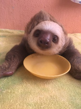 Sloth Sanctuary of Costa Rica: photo0.jpg