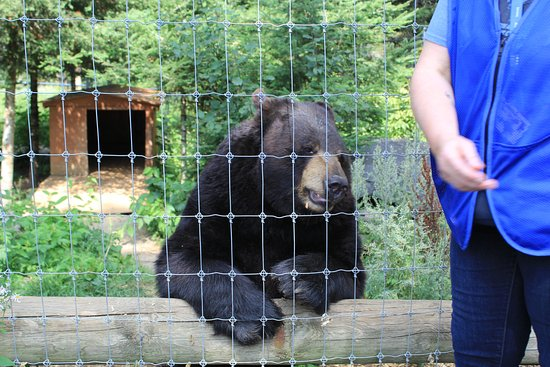 Ely, MN: up close and personal with Ted the Bear
