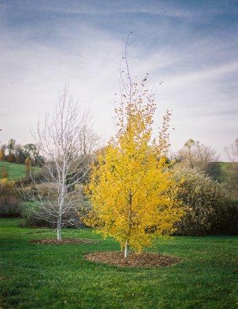 Dallas Center, IA : Autumn colors