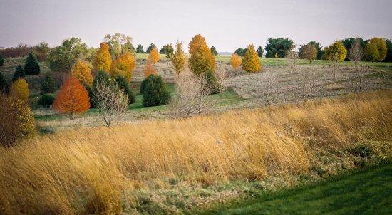 Dallas Center, IA : Iowa prairie into trees