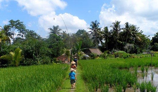 Bali Agritours