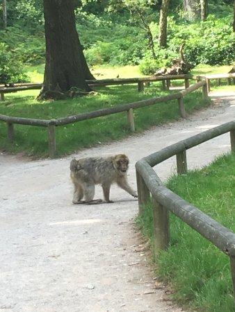 Trentham Monkey Forest: photo0.jpg