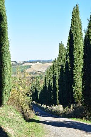 Buonconvento, Italy: Viale d'accesso
