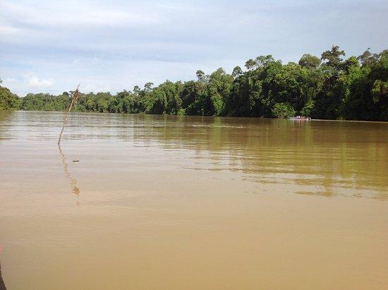 Bilde fra Borneo Nature Lodge