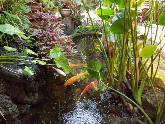 Ban Khiet Ngong, Laos: Fishpond at Kingfisher Ecolodge