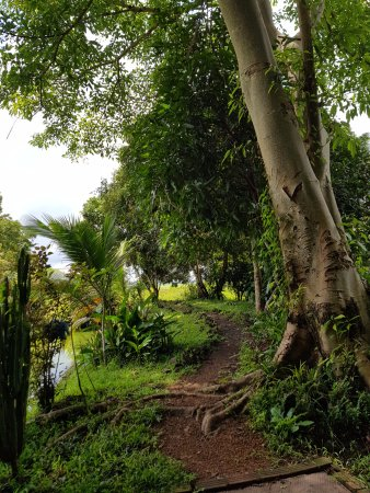 Ban Khiet Ngong, Лаос: trail to the Ban Kiat Ngong Wetlands at Kingfisher Ecolodge