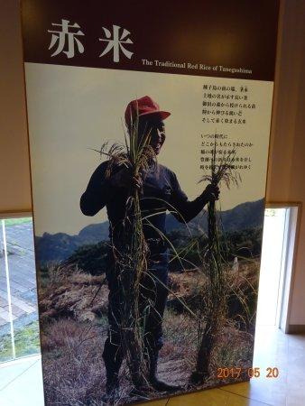 Tanegashima Akagomekan: たねがしま赤米館