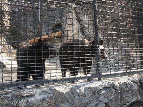 Zoo Idaho: photo2.jpg