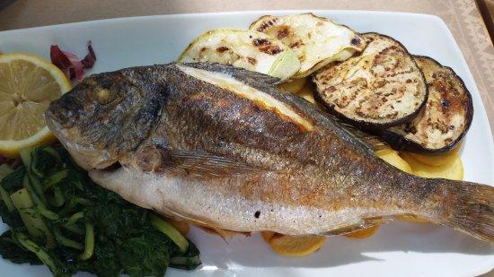 Bistro Toc: Sea Brime, Grilled with Veggies & Potato COINS, under fish