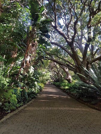 Kirstenbosch National Botanical Garden: A beautiful walkway on the way to the Boomslang