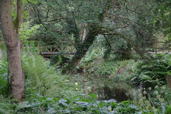 Thorp Perrow: This photo was taken in the bog garden. Stunning and totally relaxing.