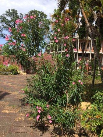 Mea Culpa Kampot : Une guest housse que je recommande . Un accueil parfait, tout le monde y est très sympathique ,