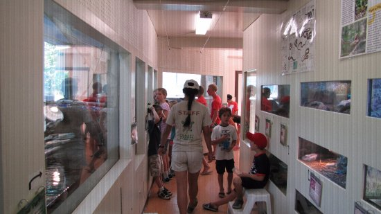 Orillia, แคนาดา: The exhibit hall, where visitors get to touch and hold some of our animals with staff guidance.