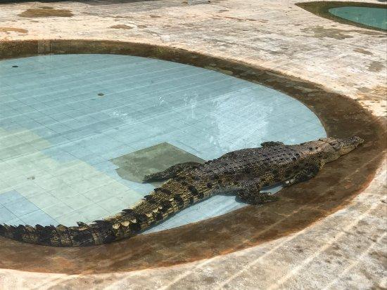 Crocodile Adventureland Langkawi: photo1.jpg