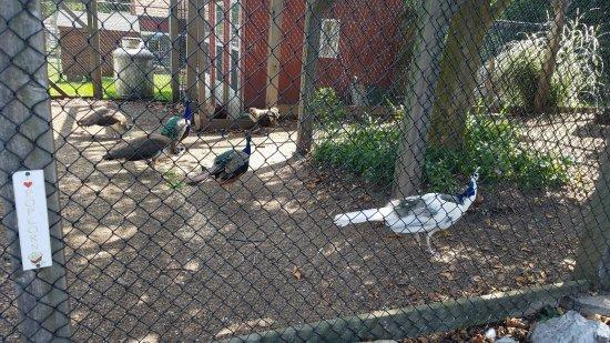Kingston, État de New York : Forsyth Park