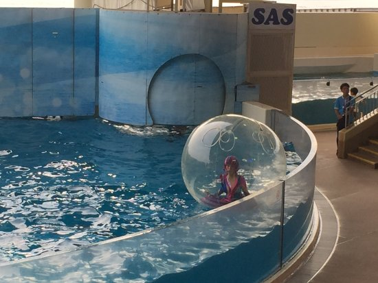 Enoshima Aquarium: photo1.jpg