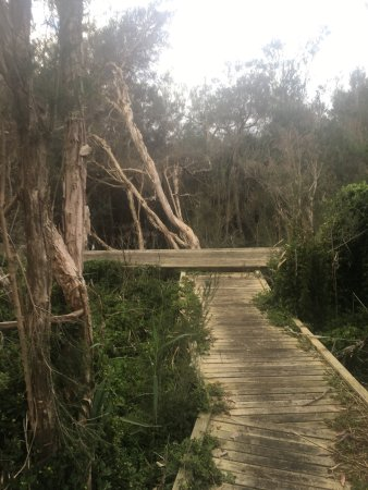 Tootgarook Wetlands