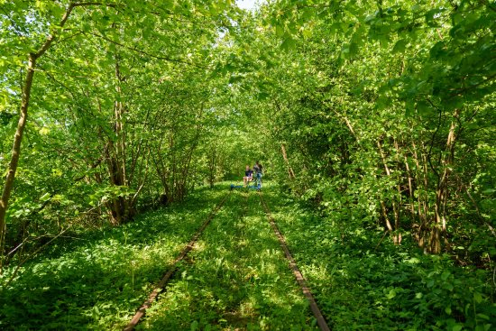 Genarp, Σουηδία: On the way in the woods