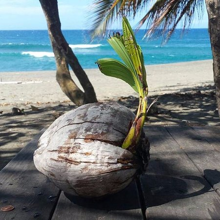 Coconut Revolution 101
