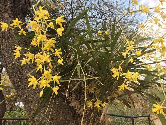 Pongola, แอฟริกาใต้: photo1.jpg
