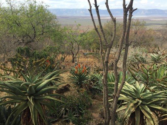 Pongola, แอฟริกาใต้: photo2.jpg