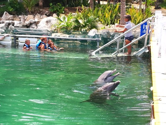 Dolphin Discovery Puerto Aventuras: IMG_20170825_134007_large.jpg