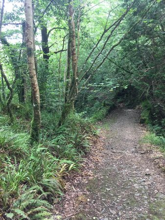 Ballynahinch Castle Hotel: One of the hiking trails
