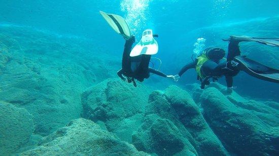 Proteus Diving