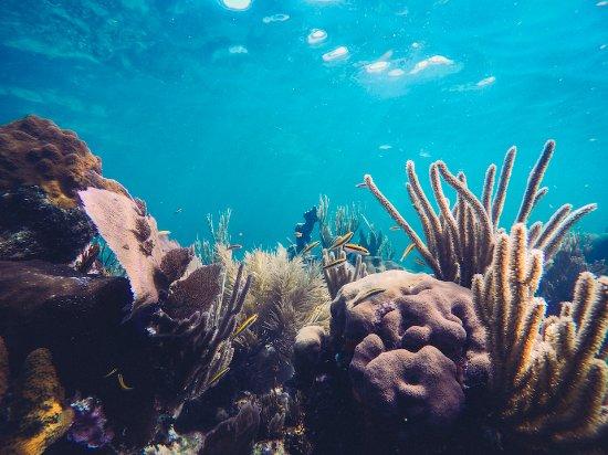 Utila, Honduras: Reef