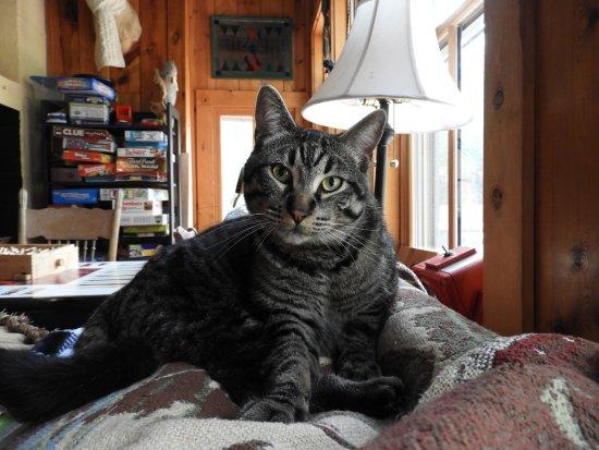 Hisega Lodge : The friendly cat