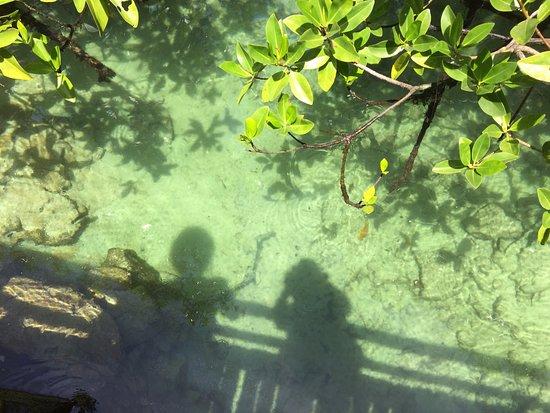 Puerto Villamil, Ecuador: pasarela entre manglares para llegar a Concha Perla