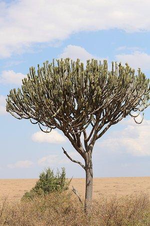 Basecamp Masai Mara: Scenery