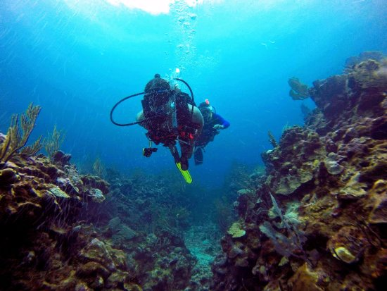 Scuba School And Family Dive Center: diving in one of the many beautiful reef areas