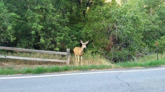 Rifle Falls: un ciervo en el camino de entrada