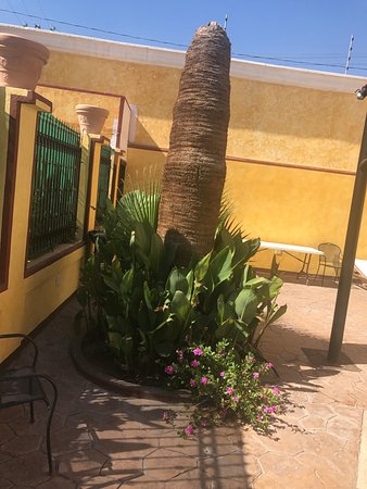 Los Algodones, México: Nice plants with flowers