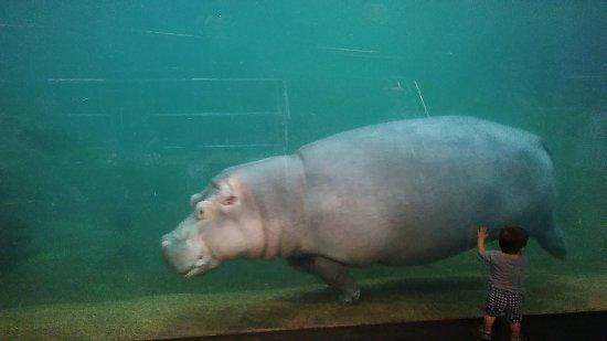 Adventure Aquarium: 0821171628_large.jpg