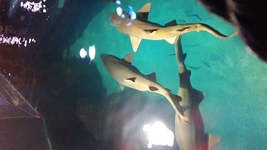 Adventure Aquarium: 0821171505b_large.jpg