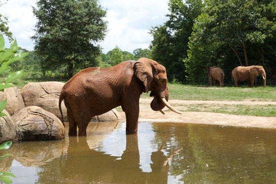 North Carolina Zoo : Amazing!