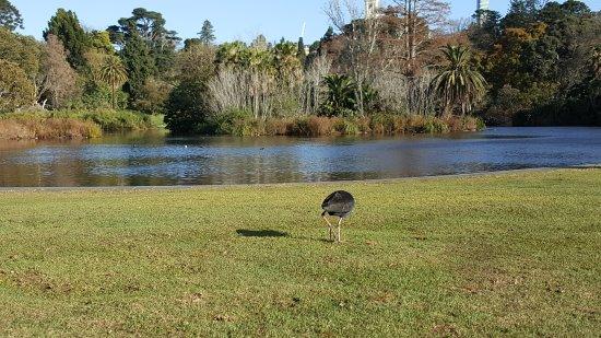 Royal Botanic Gardens Victoria - Melbourne Gardens: Bird watching